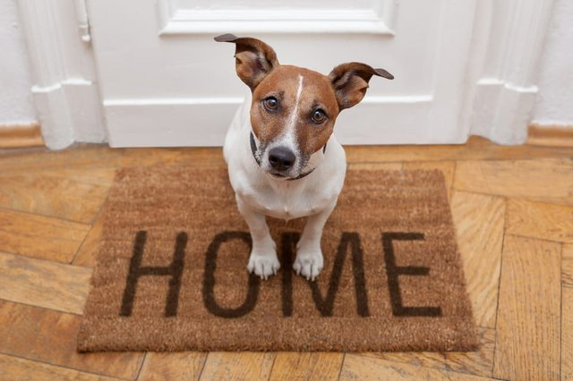 Tenants can now face additional rent charges of up to 600 annually to have pets in their home (Photo: Shutterstock)