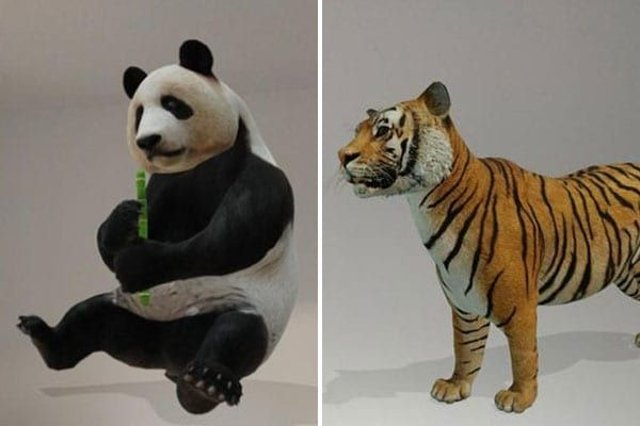 Pandas and tigers can be seen in 3D using Google