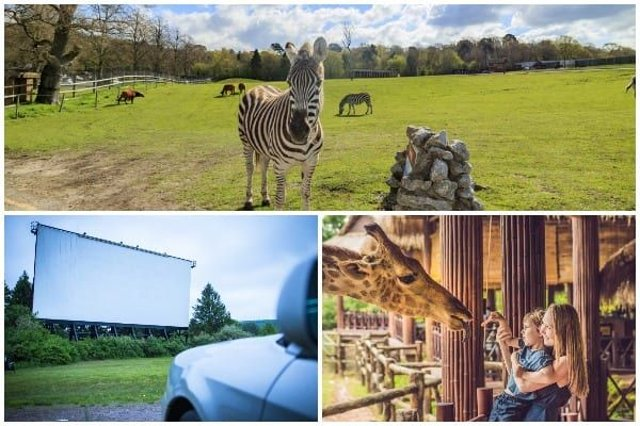 Zoos, safari parks and drive-in cinemas are set to reopen in England from Monday 15 June, Boris Johnson is due to announce (Photo: Shutterstock)