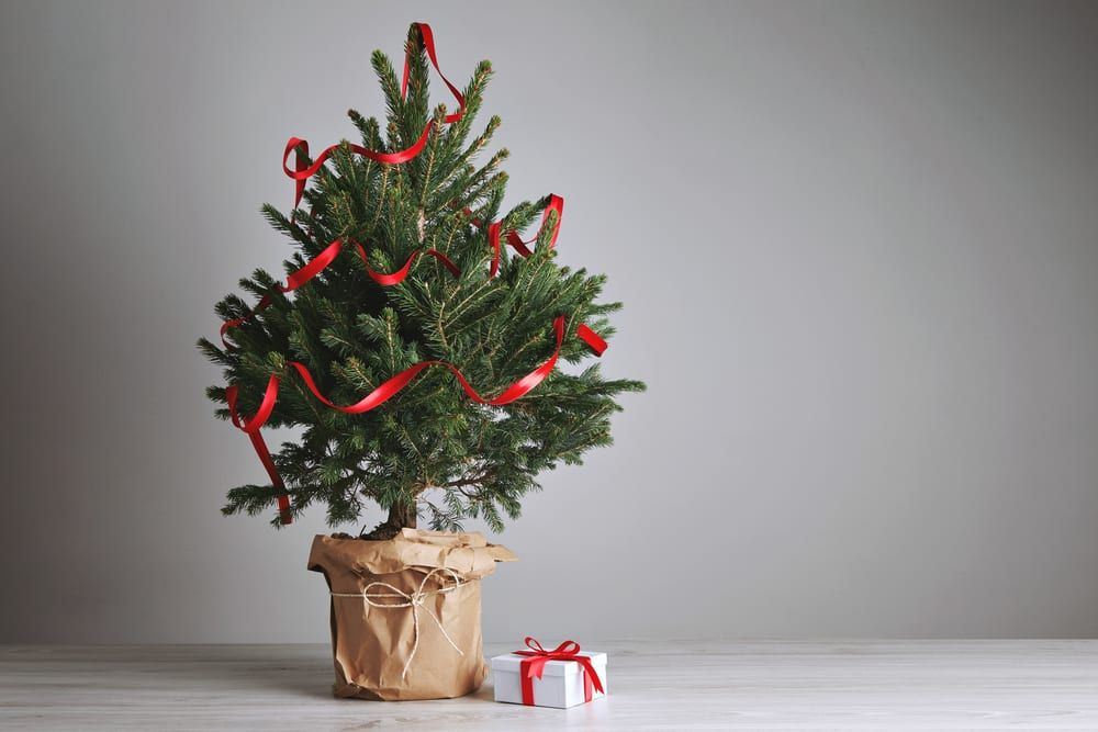 Here's what to do if you don't have space for a Christmas tree | Lancashire Evening Post