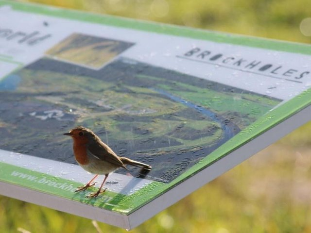 Robin perched on Brockholes sign photo by Alan Wright