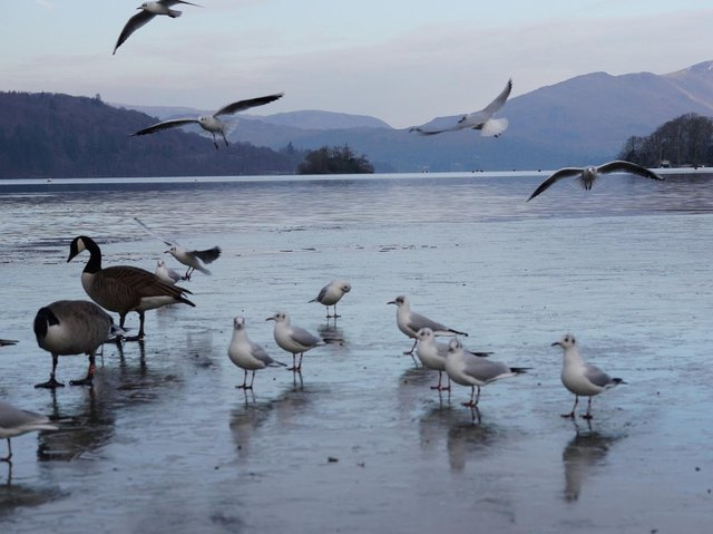 It is the first time in 10 years that parts of Lake Windermere have frozen over
