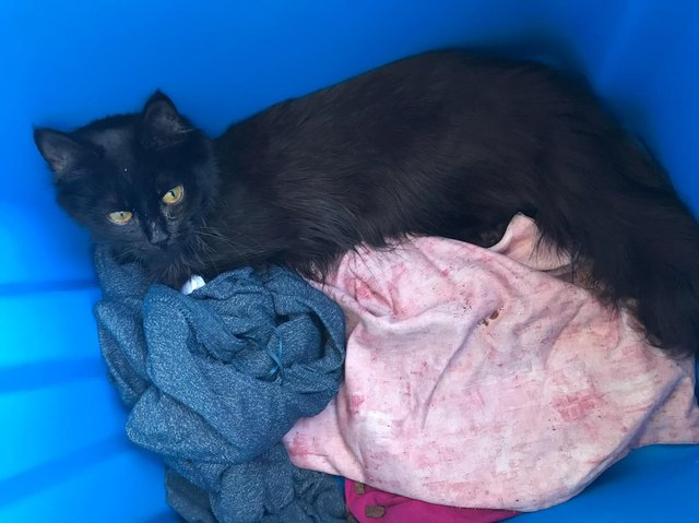 The black, semi-long haired cat was found by a member of the public in a blue recycling bin at the side of the road near the nursery in Stonygate, Preston on Thursday (March 25)