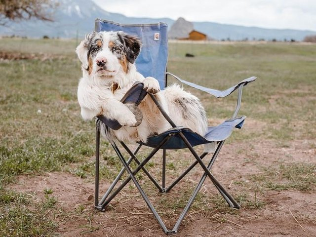 Here's some breaks you can take locally with your four-legged friends