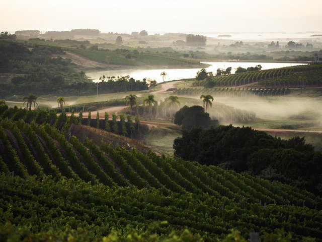 The atmospheric vineyards at one of the top wine producers in Uruguay, Bodega Garzón. Photo: Bodega Garzón