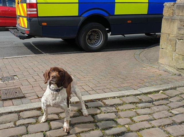 PD Jerry sniffed out the suspicious packages
