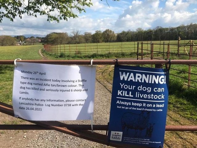 Police were called to a farm near Brindle Lodge in Hoghton after a dog got loose on fields and killed 6 lambs and sheep on Monday (April 26). Pic: Submitted