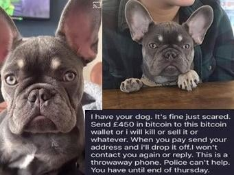 A woman in Longridge received threatening phone calls from a man who claimed he would hurt her dog Nelly if she did not pay a ransom of £1,000. (Credit: Lancashire Police)