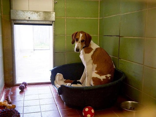 Bella was passed from home to home from birth before being brought into RSPCA's care in February 2020
