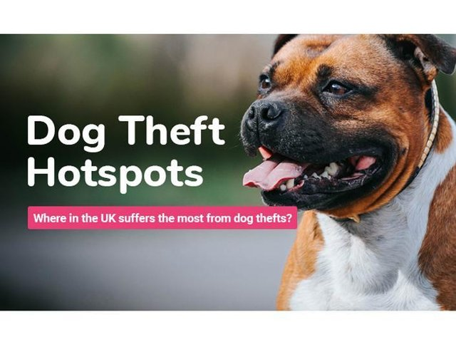 Staffordshire Bull Terriers make up just under a fifth of dog thefts in the UK