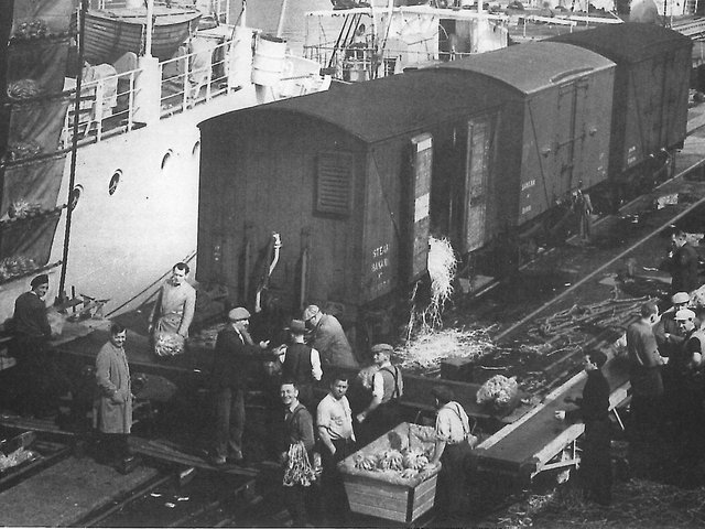 Unloading bananas by conveyor belt into railway wagons on the south side of Preston dock circa 1960