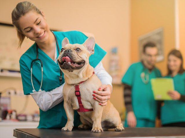 The new Veterinary School will be Based at UCLan's Preston Campus.