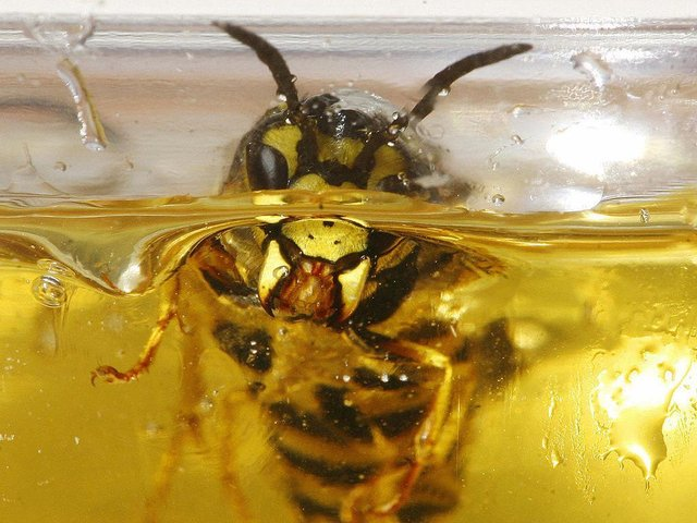 Households may need to brace themselves for an influx of wasps