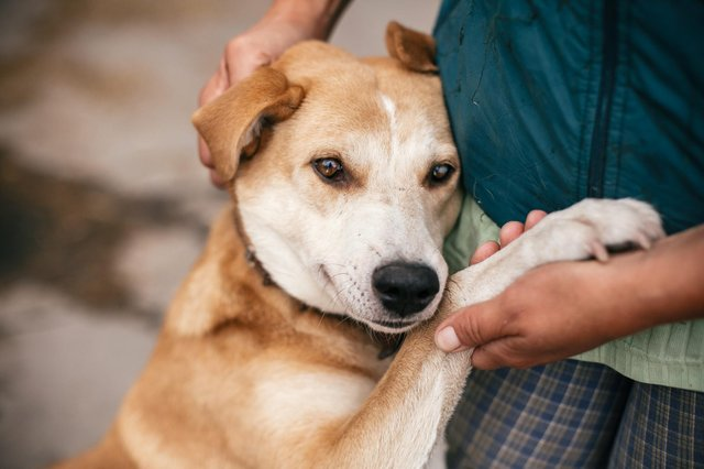 Rehoming a dog gives it a second chance at finding a forever companion.